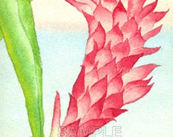 Ginger Flower Watercolor Greeting Card by J. P. Haydock (also available as a print)