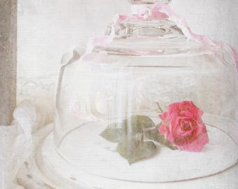 Glass Dome Cloche. Shabby Chic White. Wood Tray w Glass Cloche. ALtered Upcycled Displays.
