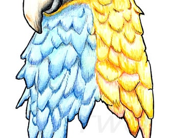 Colorful Parrot Giclee Art Print