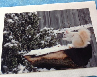 Photo Notecards, Blank Inside Notecards, White Squirrel Pictures, , 4x6 photo notecards, Animal Photo