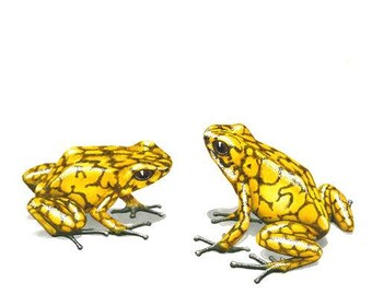 Yellow poison dart frogs Greeting Card (code OS21)