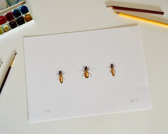 Bee print | Honey Bee picture | Bee art print | Three bees drawing print |