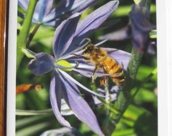 Camas flower and honey bee photo note card