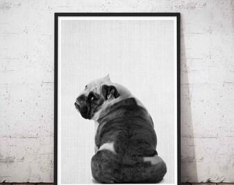 Dog Butt, English Bulldog, Dog Portrait, Portraits Of My Dog, Loss Of Dog Gift, Pet Portrait Dog, Pet Dog photograph, Nursery Print Dog