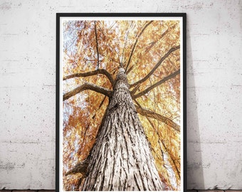 Tree Wall Decals, Tree Print Wall Art, Tree Decals, Rustic Tree Prints, Wall Decals Tree, Rustic Tree Artwork, Winter Tree Print, Tree Wall