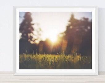 Sunlight, Morning Sun, Morning Dew, Dew print,  Morning Sun Photo, Sunrise Photo, Sun print, Sun photography, Sunlight print,#NC17