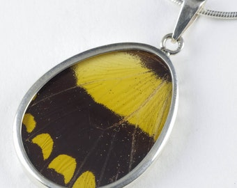 5cm Real Butterfly Wing Pendant in Sterling Silver - Jewelry Making Yellow Butterfly Pendant & Butterfly Necklace J786