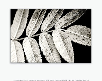Black White Nature Print, Canvas Nature Wall Art, Canvas Nature Decor, Zen Wall Print, Modern Botanical Print, Modern Nature Print, 24x36