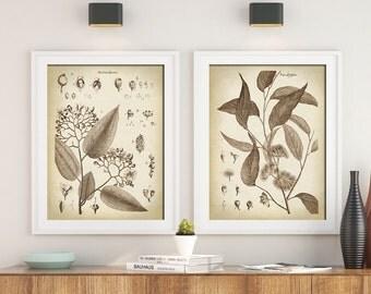 BOTANICAL Print SET of 2, Flower Poster, Flowers Print, Antique Botanical Posters, Botanical Wall Decor, Elegant Black and White Botany Art