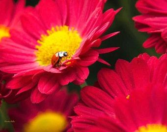 Floral Print, Ladybug Print, Nature Photography, Garden Decor, Colorful Wall Art, Nursery Decor, Photo Print, Ladybug Wall Art, Lady Bird