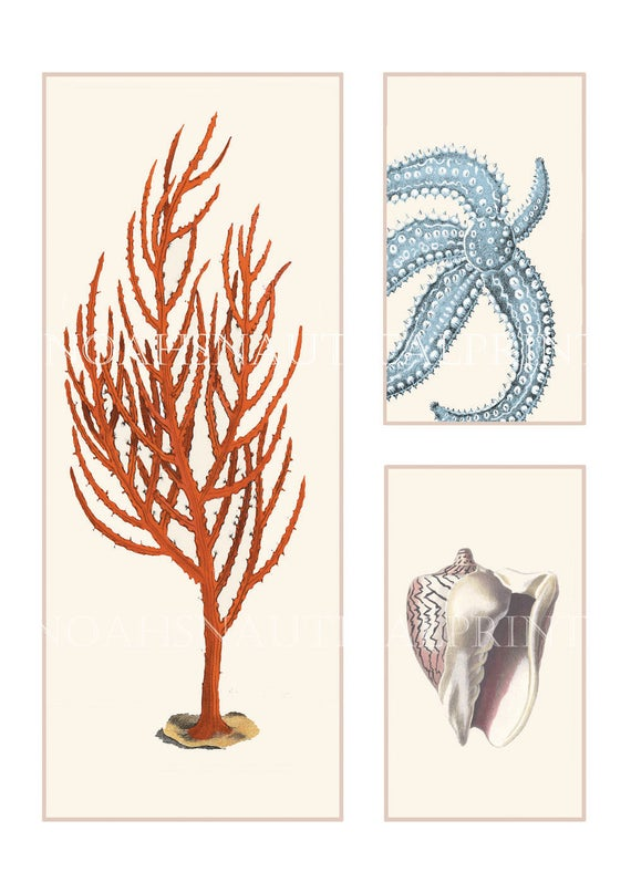 Red Starfish Wall Decor : Red coral print with blue starfish and ivory shell triptych