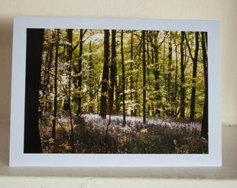 Greetings Card: Bluebells in the sunlight