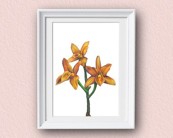 Orchid Art Print - Yellow - Orchid Art - Giclee Art Print