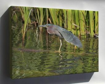 Canvas 24x36; Green Heron North Pond Chicago