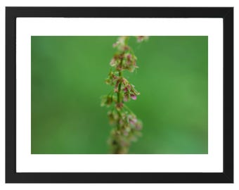 Flower print with green background, digital download, color photography, macro photography