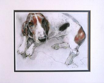 Dog Drawing (Basset Hound)