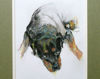 Dog Drawing - Rottweiler