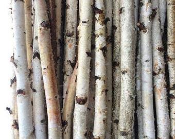 """40 White Birch Poles 26"""" Long"""