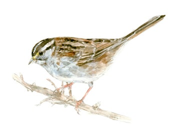 White Throated Sparrow watercolor painting - bird watercolor painting - 5x7 inch print - 0105