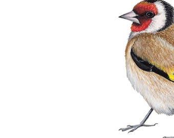Goldfinch - Goldfinch Art Print - Bird Gifts - Bird Lover Gift - Bird Art - Bird Art Print - Art Print - Bird Print - Bird lover - Bird gift