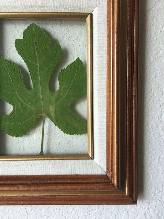 Fig Leaf Botanical 5X7 - Real Pressed Fig Leaf- Green Accent Leaf Art- Herbarium Art - Floating Vintage Framed Floral Art-  Fig Leaf Art