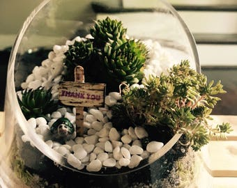 thank you succulent garden w tiny turtle