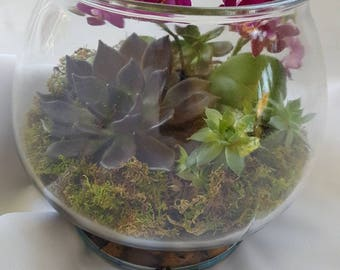 Elegant purple themed Miniature Orchid and Succulents Terrarium