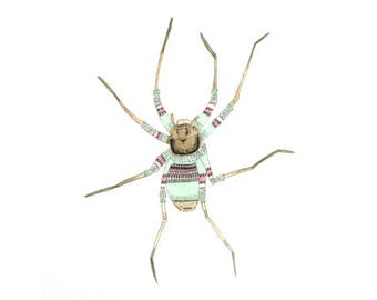 Huntsman Spider in Sweater - Limited Edition Digital Print - A4