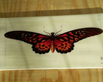 Bathroom or Kitchen Feature Tiles - Insects - Butterfly - Dragonfly - Unique Custom Feature Tiles for your renovation or interior design