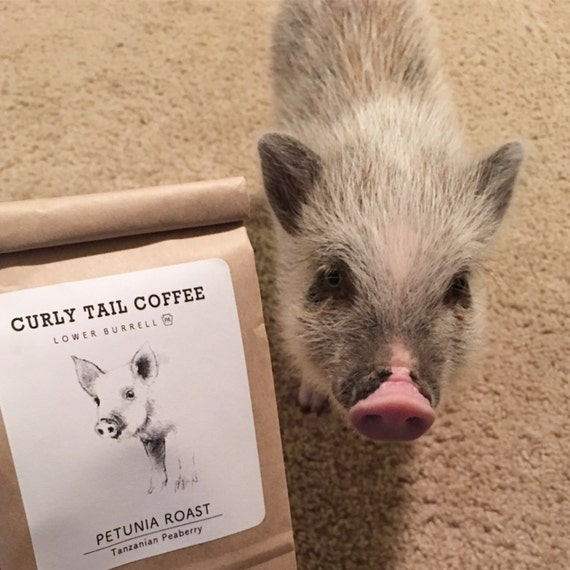 Petunia Roast, peaberry coffee, small batch coffee roaster, home roasted coffee (Pig Placement Network)