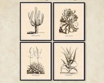 Succulent print set, Antique botanical print set, Art print vintage, Set of 4 prints, Digital botanical print, Succulent, Printable art, JPG