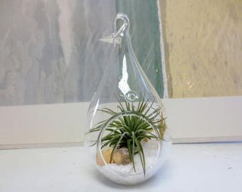 Miniature Teardrop Air Plant Terrarium / Ocean Themed Tillandsia Terrarium / Complete DIY Kit