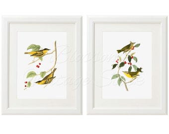 Vintage Birds Print Set, Wall Art, Printable Art, Antique Illustrations INSTANT DOWNLOAD Digital Images 5x7, 8x10, 11x14 Included - 2027