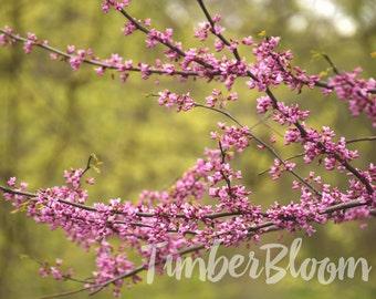 Spring Buds - Digital Download