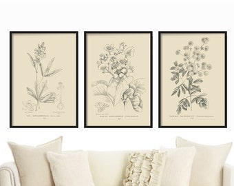 Botanical Print Set, Illustration Prints, Vintage Botanical, Vintage Floral Art Print, Wall Art Decor, Home Decor, Floral Wall Print Decor