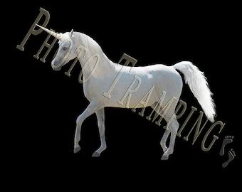 Unicorn Overlay