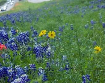 Median Wildflowers