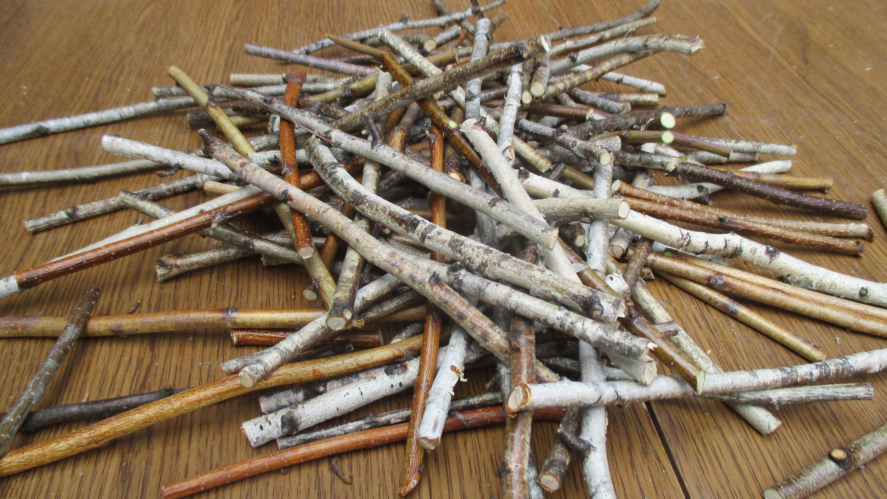 50 Small Birch Wood Sticks Birch Sticks Wood Decor Vase