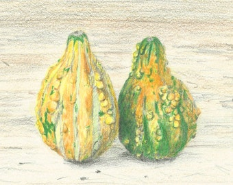 Winter Squash, Gourds, Original Color Pencil Drawing