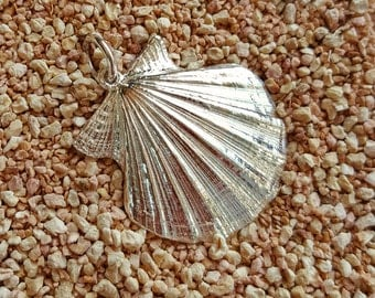 Maximum Comb shell silver pendant-collection on the SEA
