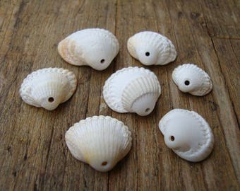 White Cardium sea shells-top drilled sea shells-jewelry/craft supplies-genuine sea shells-fossil Cardium-supplies