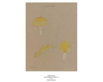 Amanita Muscaria - Green Mountain, Vermont '15 - Botanical Illustration Chart - Watercolor Painting - Scientific Illustration - Print