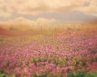 Field of Purple/Lavender Flowers with Light Leak Photography Digital Background/ Digital Backdrop / Overlays / Outdoors