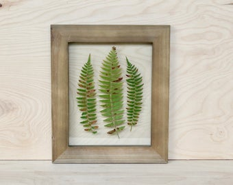 Woodland Fern Art   Framed Pressed Plants   Northwest Art Gift   Rustic Framed Fern   Nature Inspired Home Decor   Green Botanical Wall Art