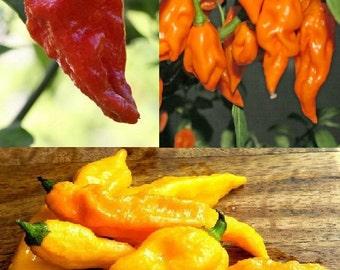 Bhut Jolokia chilli (5 or 10 SEEDS)
