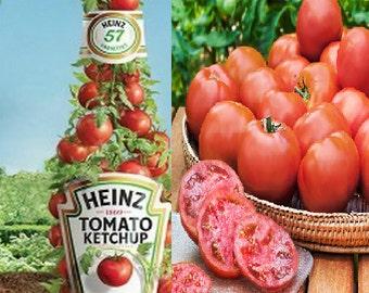 Tomato 'Heinz 1370' Heirloom - Ketchup Tomato (50 SEEDS)