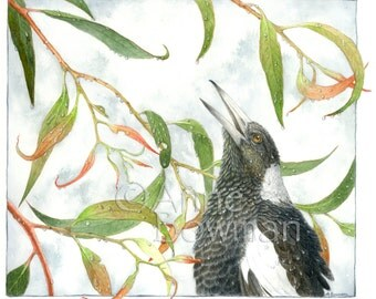 Magpie After Rain - A3 or A4 Print