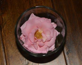 Rose, Pink Rose, Rose in a Glass