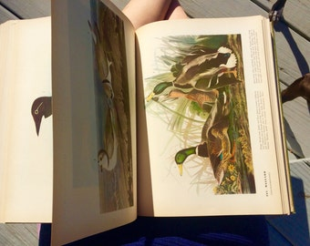 SOLD -- Vintage book RARE The Birds of America by John James Audubon, 1937 collectible edition, William Vogt intro, color plates every page