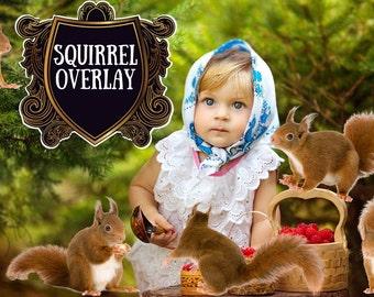Squirrel overlay Photoshop overlays Baby Girl Children in the forest